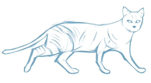 Cómo dibujar un gato realista, para principiantes, Paso 1