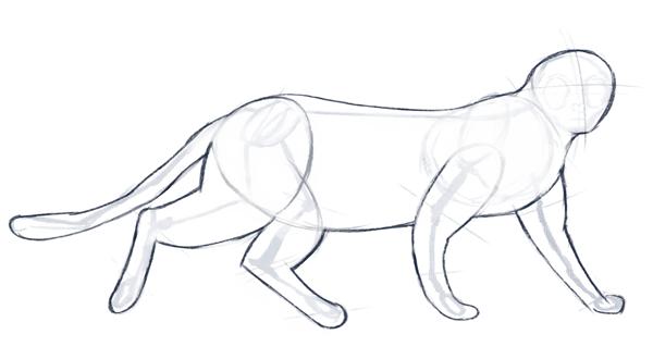 Cómo dibujar un gato realista, para principiantes, Paso 3