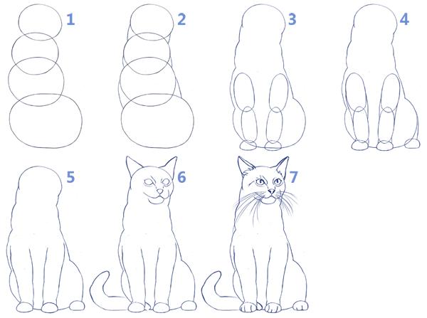 Cómo dibujar gatos realistas paso a paso, Dibucorp