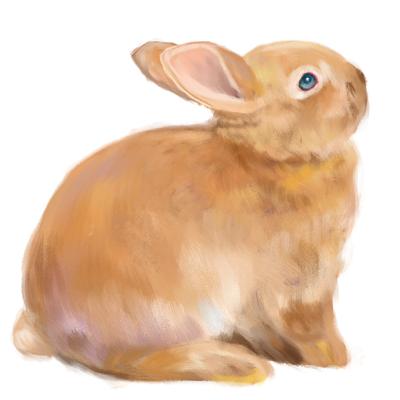 Cómo dibujar un conejo realista paso a paso, Paso 15